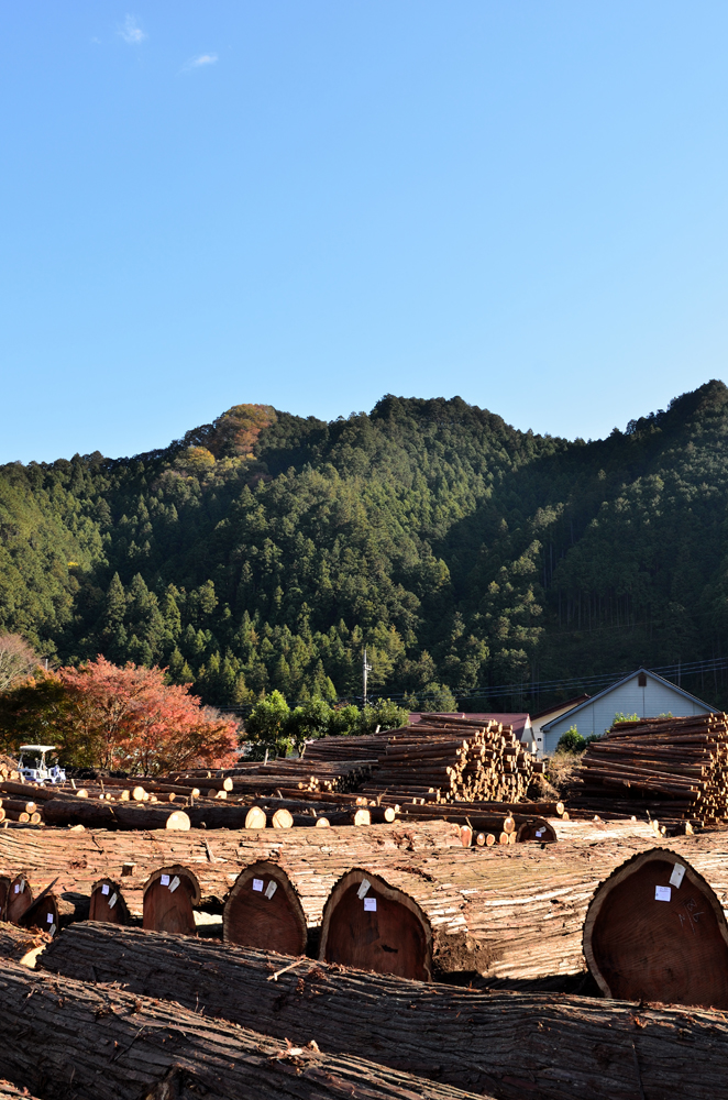 原木市場 西川材