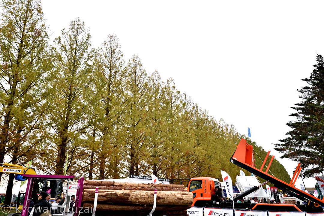 旧秋川高校 メタセコイア並木
